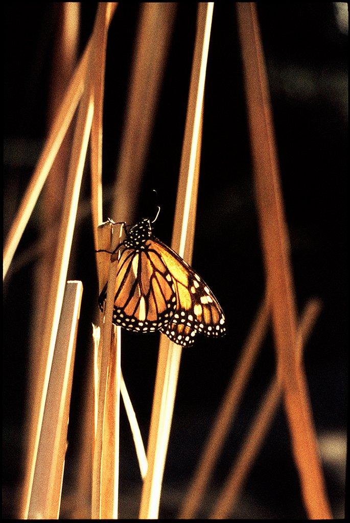 14-monarch-music-acadamy-final-photosite.jpg